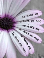 he loves me he loves me not psychic love reading